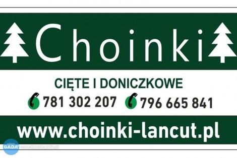 CHOINKI - Oferujemy drzewka cięte oraz w doniczkach - Łańcut i okolice