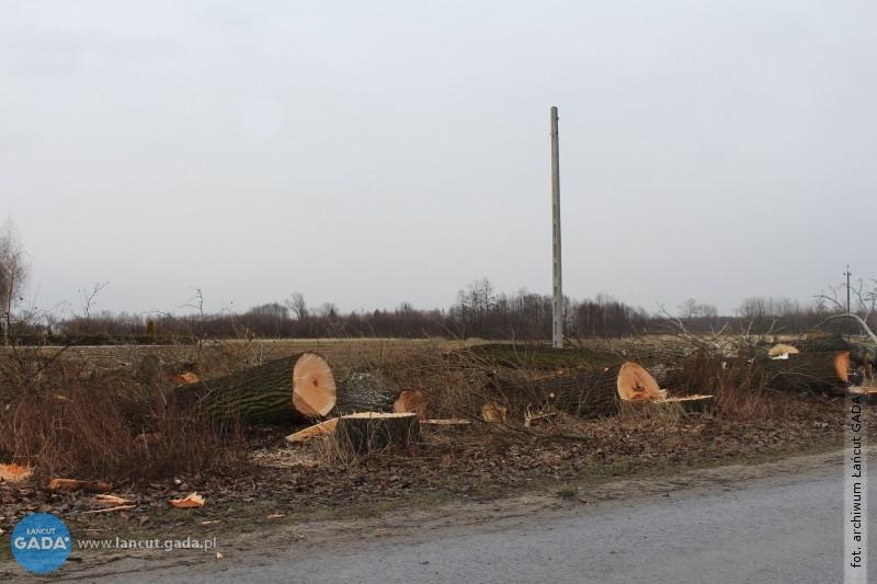 Zmiany wprzepisach owycince drzew
