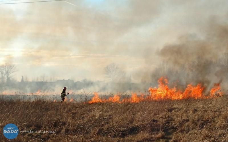 Spłonęło prawie 4 hektary