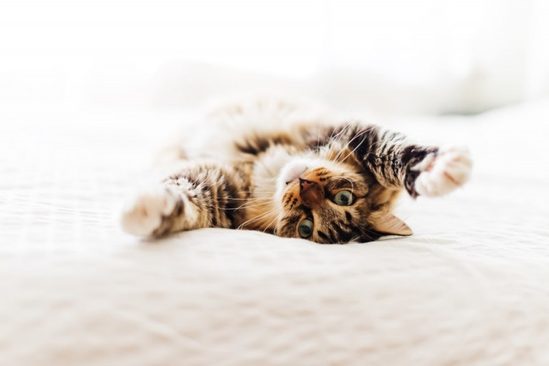 Co lubią jeść koty, aco jeść powinny?
